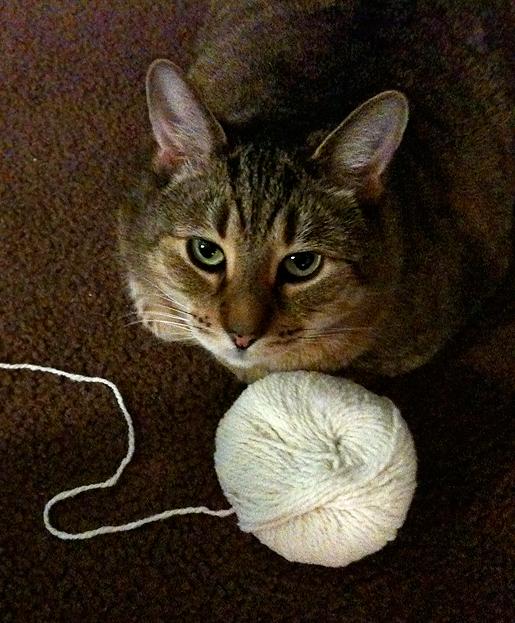 Yogi-yarn